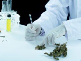 CBD, Marijuana, and Hemp
